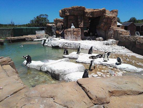 Cape Recife Nature Reserve: Penguins at SAMREC