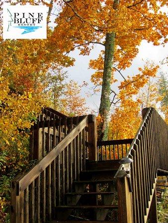 McMillan, MI: Bearutiful Fall Color