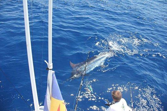Calheta, Πορτογαλία: Dream Catcher sport Fishing .MA Big game Fishing trips