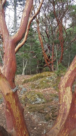 Friday Harbor, WA: red trunked trees and hiking path