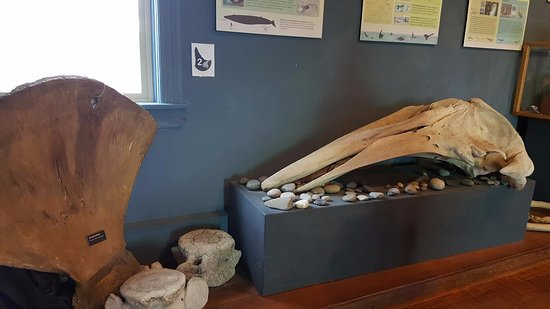 Friday Harbor, Etat de Washington : whale bones