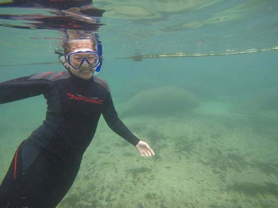 Crystal Lodge Dive Center: Chilling in front of a manatee