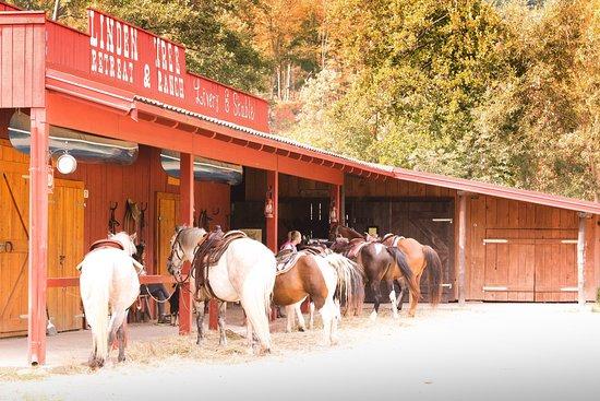 Velika Plana, Croatia: The Barn