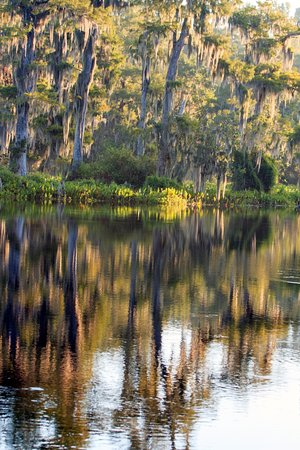 Edward Ball Wakulla Springs State Park: Reflections