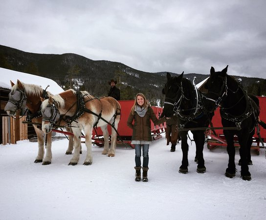 Keystone, CO: meeting King and Chief, the Percheron brothers