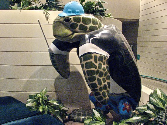 Ruth Eckerd Hall: Turtle