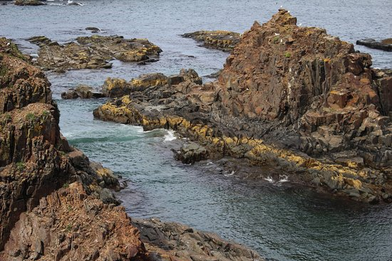 Elliston, Canada: view to get to the puffins
