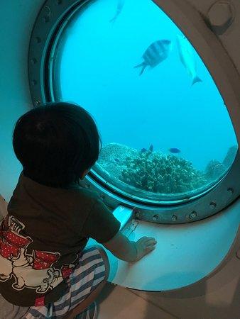 Piti, Mariana Islands: 海中展望塔より