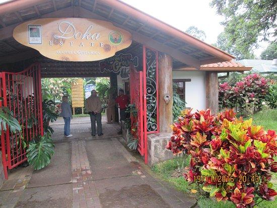Poas Volcano National Park, Kosta Rika: Кофейная плантация
