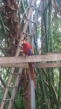 Quepos, Costa Rica: Lapa