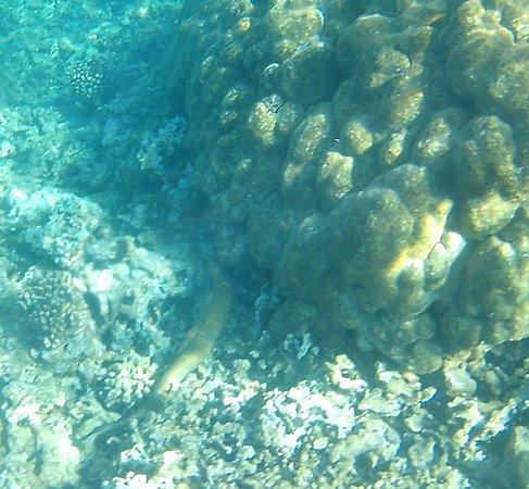 Wailuku, HI: moray eel