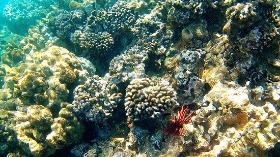 Wailuku, HI: colorful coral