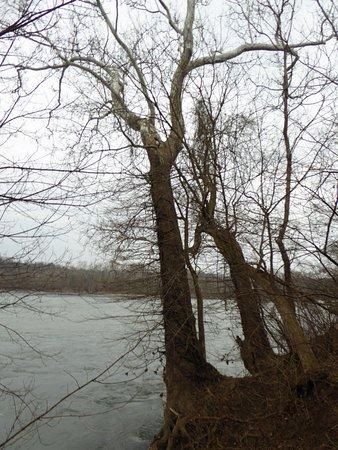 Great Falls, VA: Tree and River