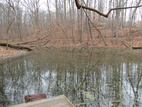 Great Falls, VA: Pond