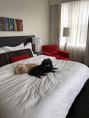 The 31st Floor Picture Of Loews Philadelphia Hotel