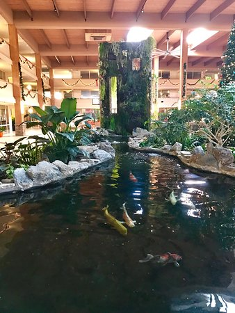 Suffern, NY: Lobby and koi pond!
