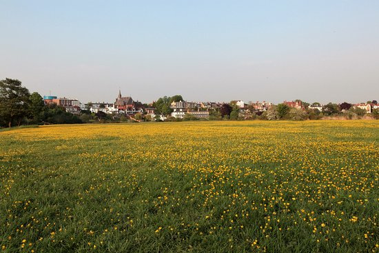 Christleton, UK: Wild summer flowers on the Meadows in Chester.