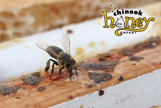 Okotoks, Canada: A honeybee taking a honey break.