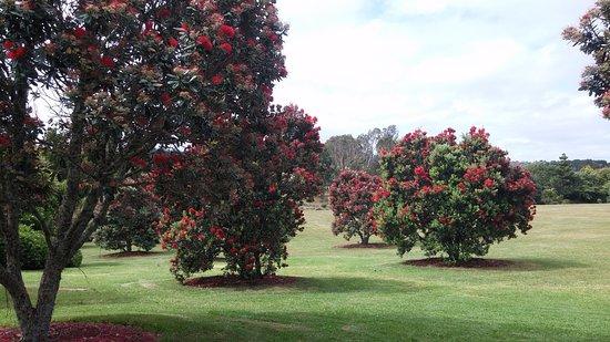 Auckland, Selandia Baru: 오클랜드 식물원 포후투카와