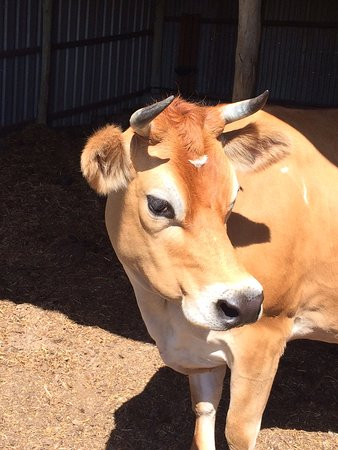 Ellendale, Australia: All of the animals on the farm are lovingly cared for and very friendly to visitors!