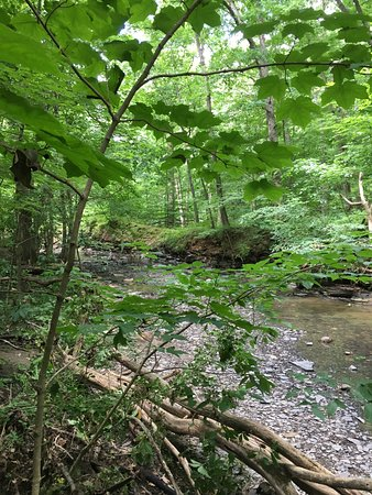Lewis Center, OH: a small glimpse of the stream