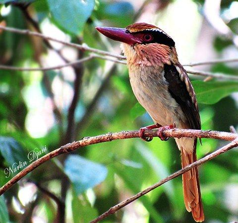 Tangkoko Nature Reserve照片