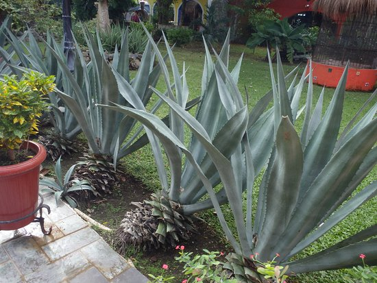 Free Tequila Tour By Casa Mission: Gardens
