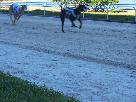 Sarasota Kennel Club All You Need To Know Before You Go With Photos Tripadvisor