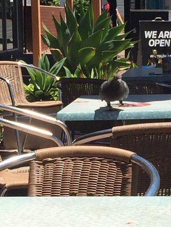 Glenelg, Austrália: photo0.jpg