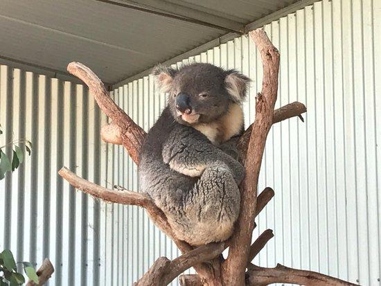 Seddon, Australien: Irresistable!