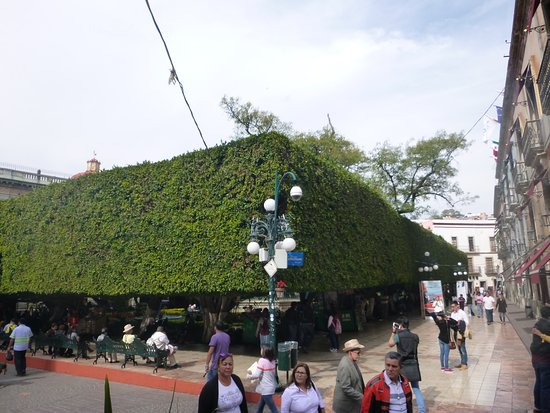 Posada Santa Fe: The hotel is located behind the trimmed trees dead center of picture