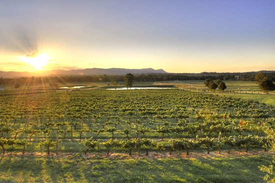 Beautiful view of Lovedale Hunter Valley Wine Country and the Brokenbacks from Allandale Winery.