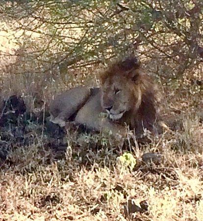 Meru National Park, Kenia: photo5.jpg