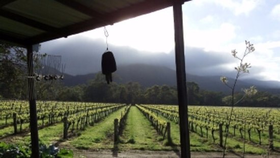 Mount Barker, Αυστραλία: WINE AND VINE - Vineyard shots do not get any better than this!