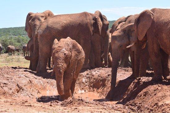 Addo Elephant National Park, Südafrika: photo0.jpg
