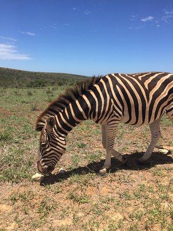 Addo Elephant National Park, Sudáfrica: photo2.jpg