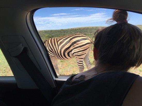 Addo Elephant National Park, Sudáfrica: photo3.jpg