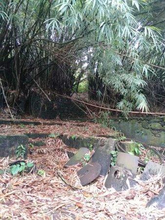 Guayana Francesa: Sentier Vidal Mondélice : vestiges sucrerie au bout du circuit