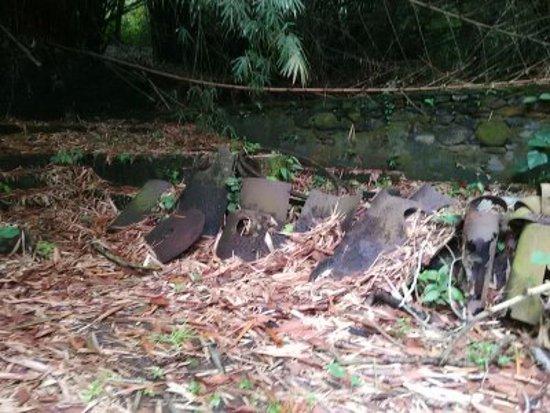 Guayana Francesa: circuit guidé plantation cacao:vestiges d'ancien site fabrication chocolat