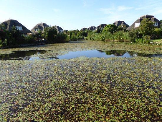 Hellevoetsluis, Países Bajos: Choose your property , or bring a rake.