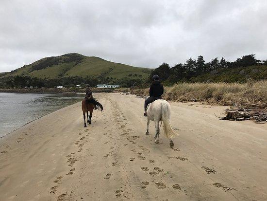 Owaka, Nueva Zelanda: photo3.jpg