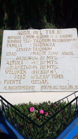 Oaxaca, Mexico: Tablica z opisem najwiekszego drzewa w Meksyku