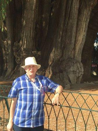 Oaxaca, Messico: To ja niedaleko drzewa