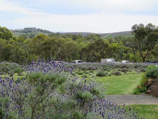 Lyndoch, Australia: Panorama