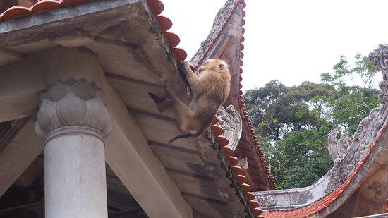 Phan Thiet, Vietnam: Des singes partout
