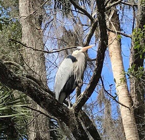 Homosassa Springs, FL: photo8.jpg
