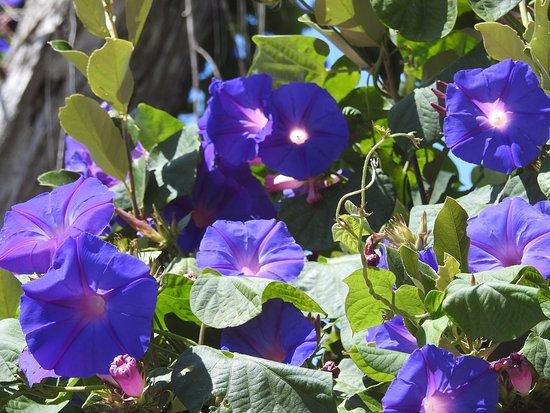 Constantia, South Africa: Im Garten