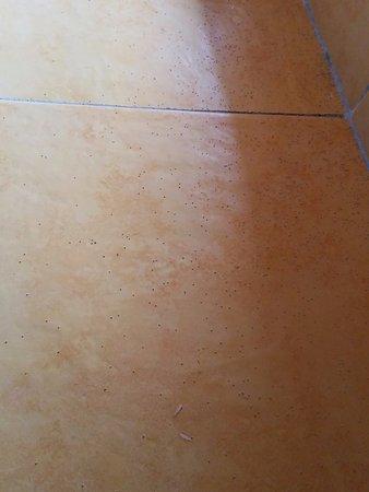Koko Resort: termite dust & wings