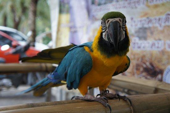 Chiang Mai Zoo: DSC05594_large.jpg