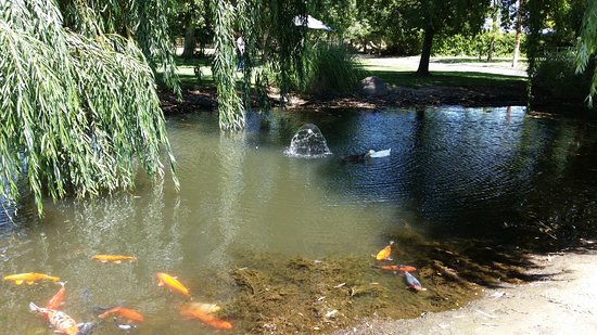 Oakdale, Califórnia: The Koi Pond